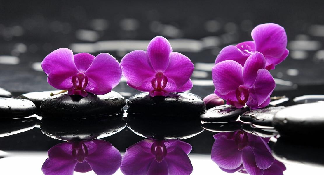 6979337-purple-flower-on-stone